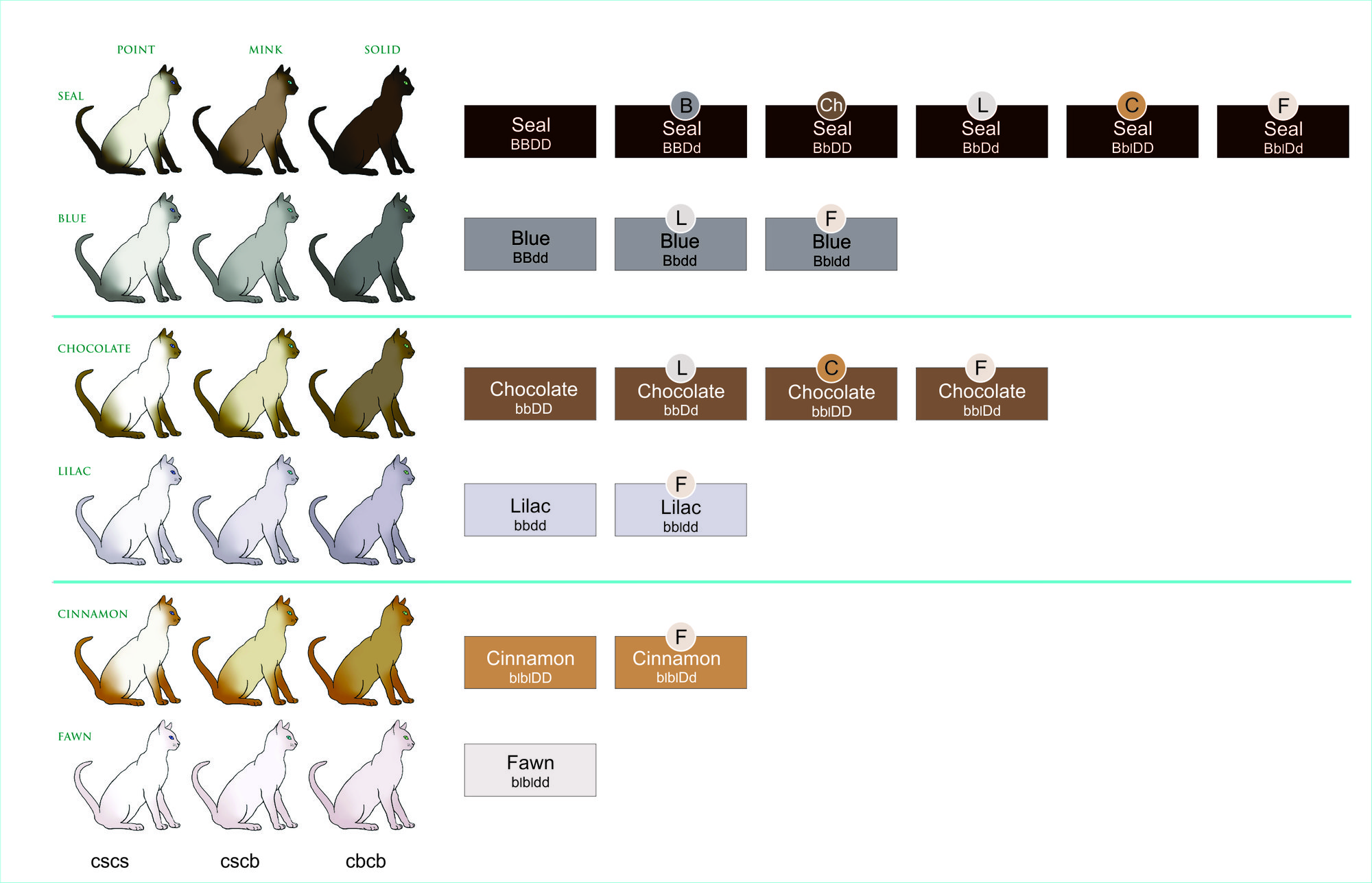 Genetics Of Coat Colour And Pattern :: Tonkinese Cats