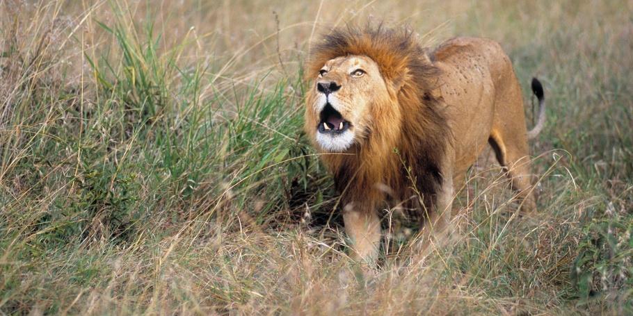 Wildlife from around the world