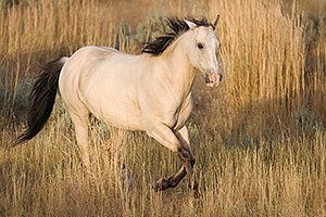 Horse in tall grass