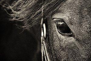 Horse in the Irish countryside