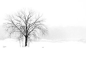 Stark lone winter tree