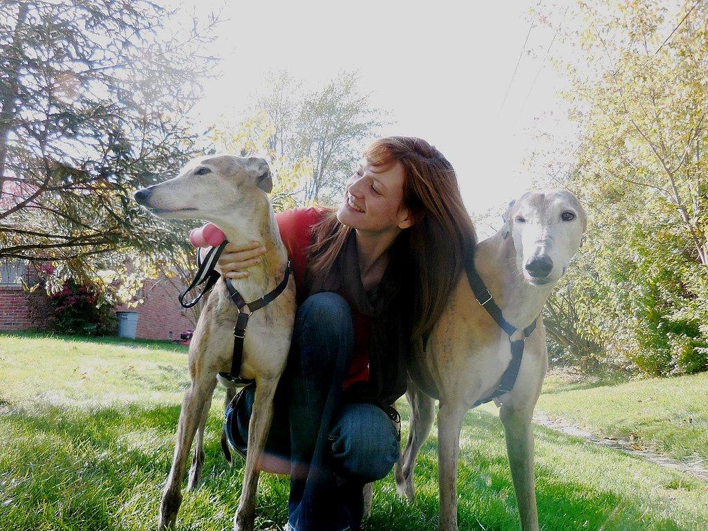 Greyhound Dog T Shirt GH Mom