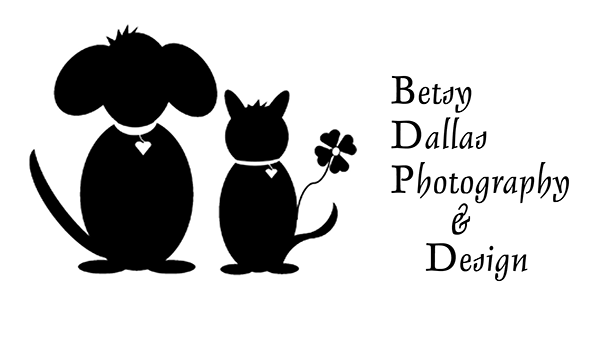 Betsy Dallas Photography & Design