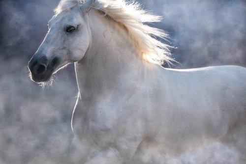 Equestrian Limited Edition Luxury Fine Art Print