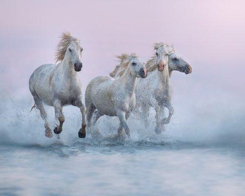 Equestrian Limited Edition Fine Art Print