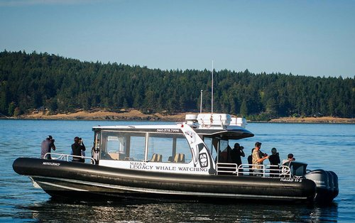 Whale Watching charter boat
