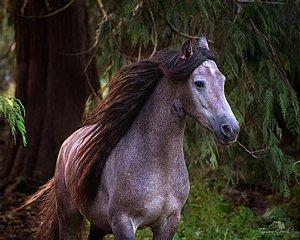 Warlander Horse at liberty