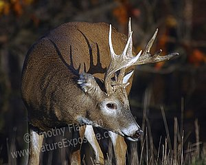 The Whitetail Deer Program by Tim Flanigan