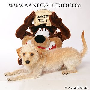 Taz dog photo shoot at a and d studio