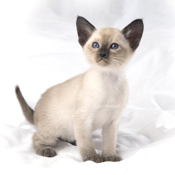 kitten attract litter