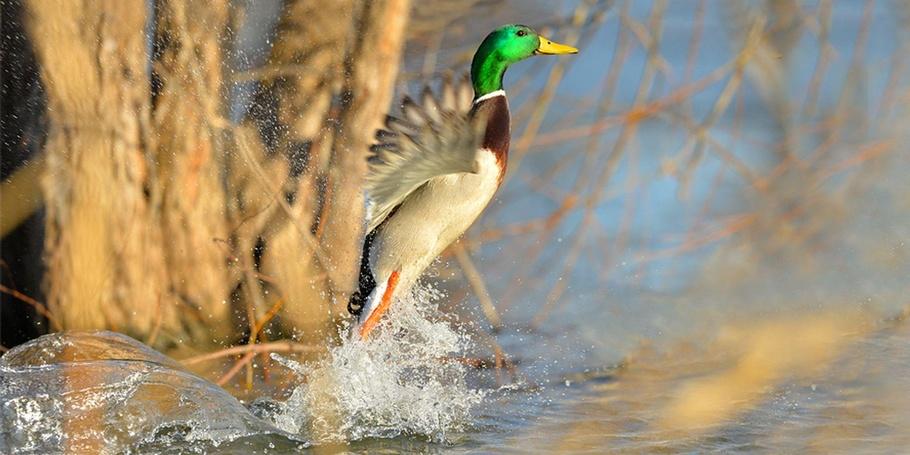 Wildlife & Nature