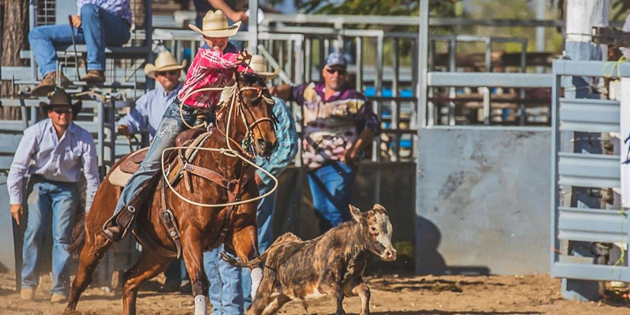 Calf Roping Mareeba Rodeo JUly 2018