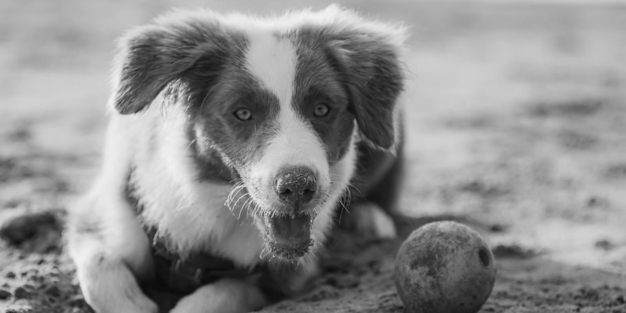 Georgie - Black and White four Mile Beach April 2019