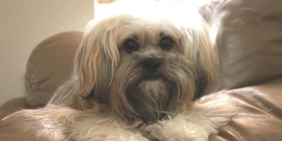 PETS - Meet Zoe