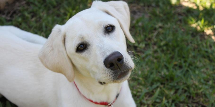 PETS - Meet Dixie