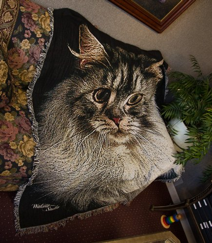 Large Afghan of Cat