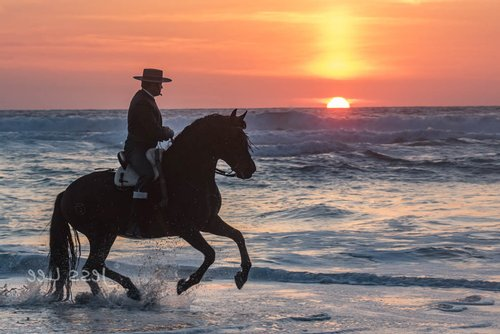 Horseback in the baja surf