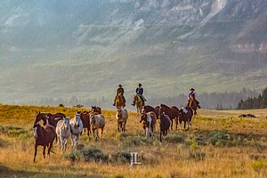 Wyoming Cowboys herding horses