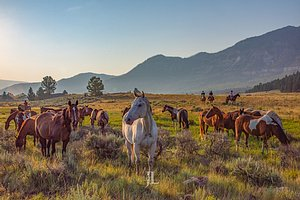 Wyoming horses an cowboys