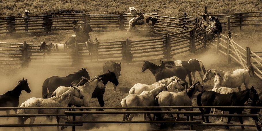 Bucking Horse Roundup