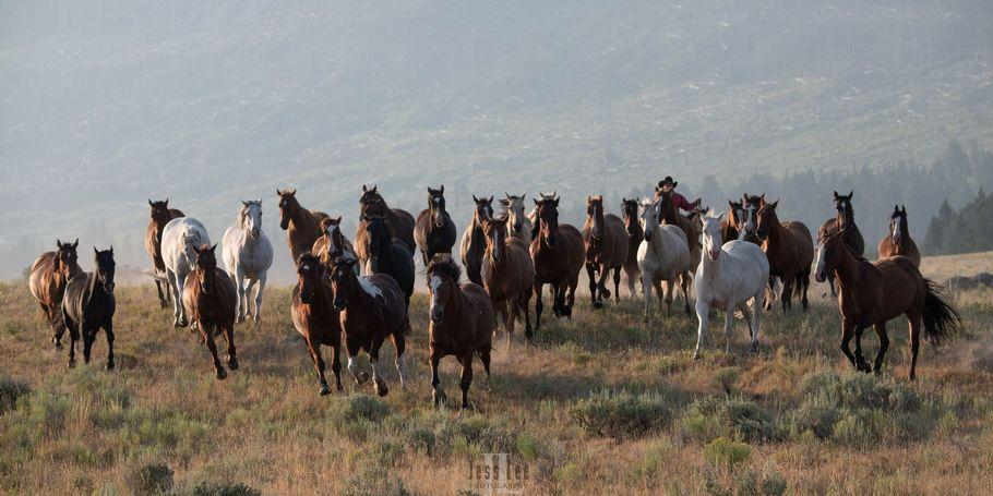 Cowboy stampede