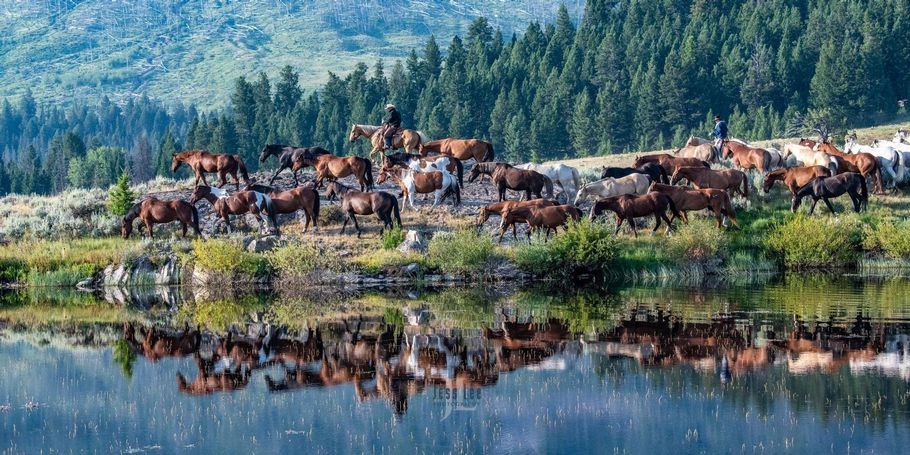 Wyoming horse herd