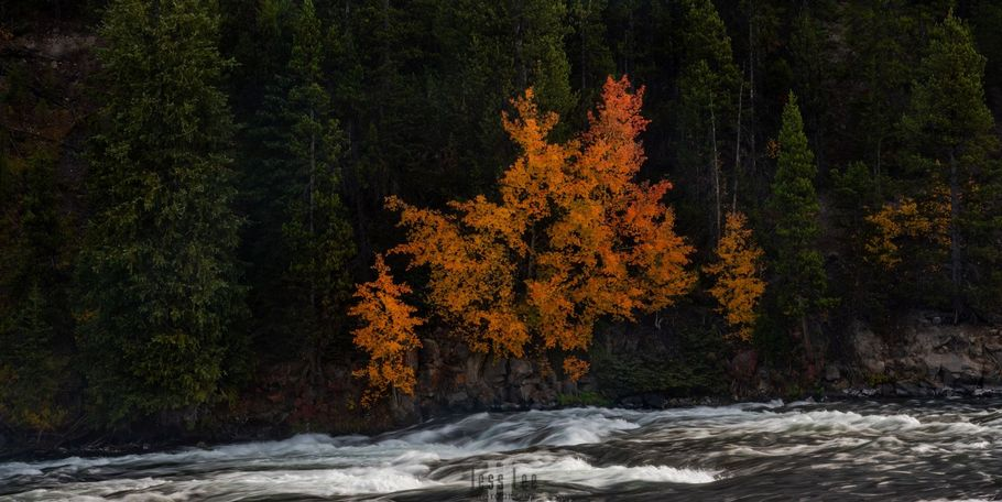 Autumn Yellowston River