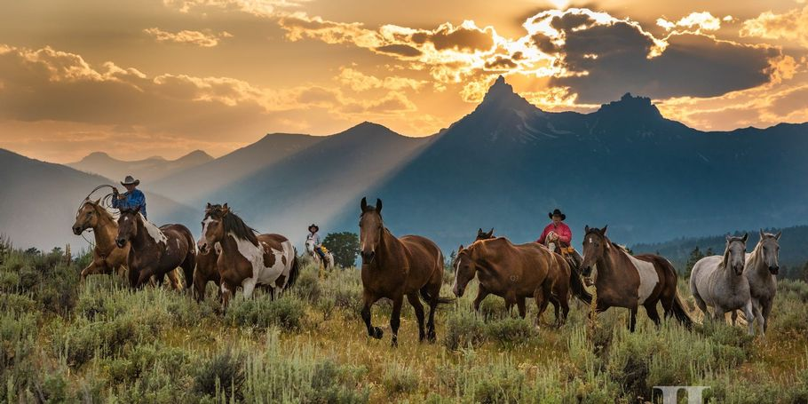 Wyoming Cowboy roundup