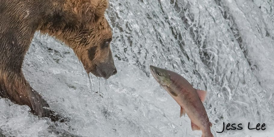 Alaska Brown Bear Fishing Photo Workshop
