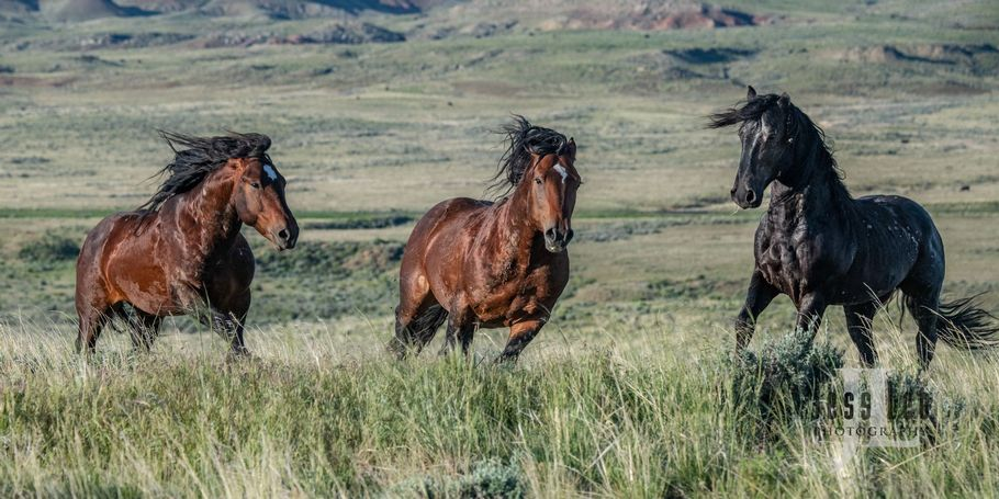 Wyoming Wild Horses photo workshop