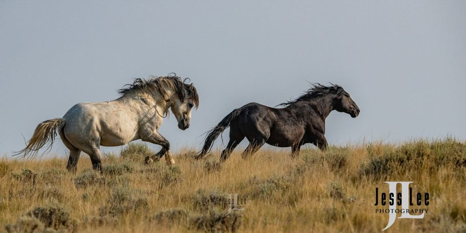 Cowboy Wild Horse Photography Workshop Wyoming with Jess Lee