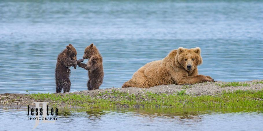 Dancing Cubs Katmai photo workshop