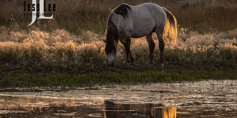 Wild Horse at Waterhole