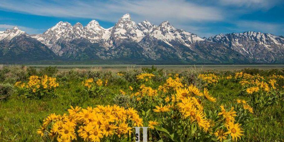 Grand Teton Spring