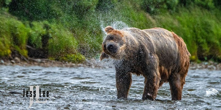 twisted Brown Bear