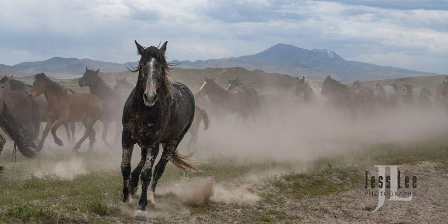 Wild Horse Photo Workshops by Jess Lee