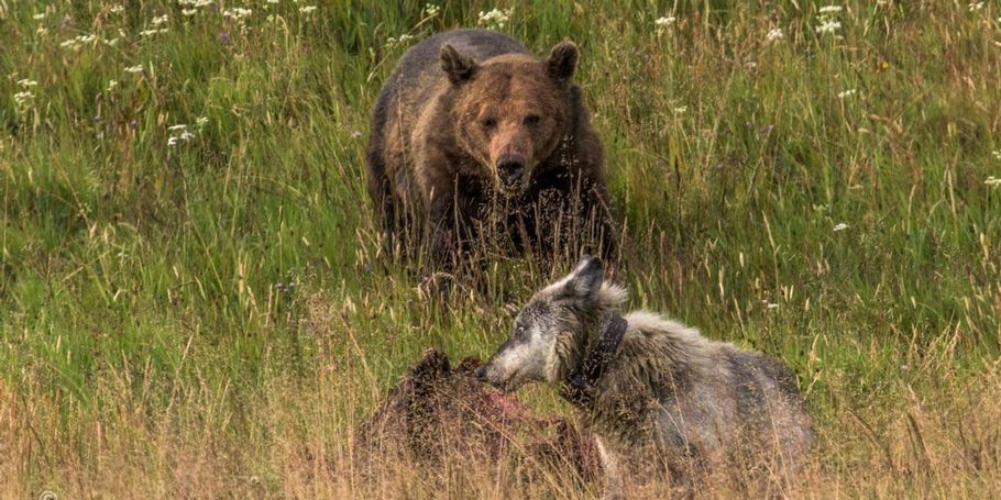 Yellowstone photo workshops and tours
