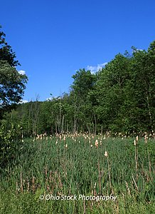 Meadow surrounded by trees at Beaver Creek State Park photo by Ohio Stock Photography 43A2