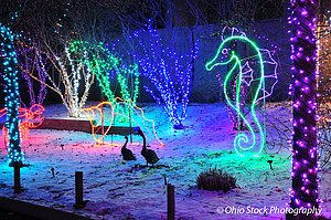 Blue, green, pink and purple holiday lights on trees and in the shape of a seahorse and the silhouette of two geese at Wildlights at the Columbus Zoo photo by Ohio Stock Photography D14F27
