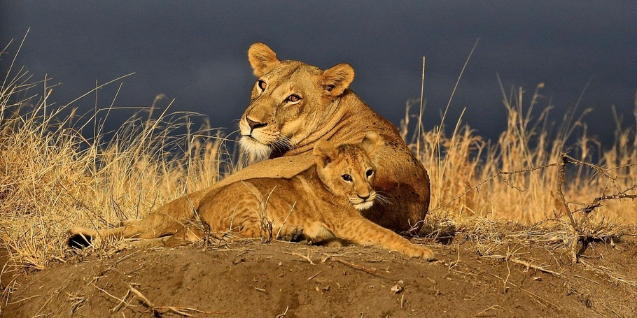 Mother and cub with a storm coming