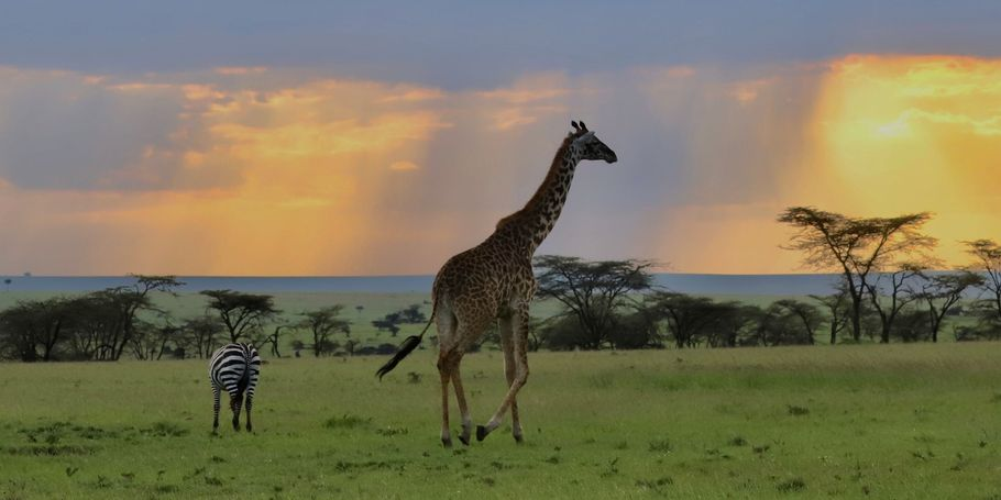Kenya's Spring Rains