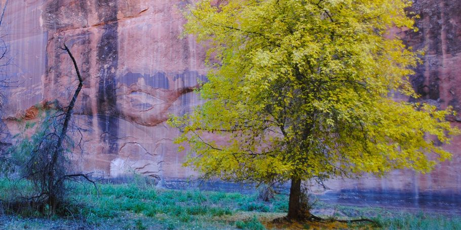 Canyon de Chelly #12