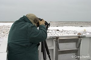 Photographing Polar Bears In Manitoba Canada