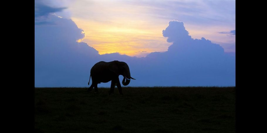 Elephant Grazing At Sunset