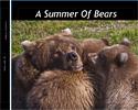 A Summer Of Bears
