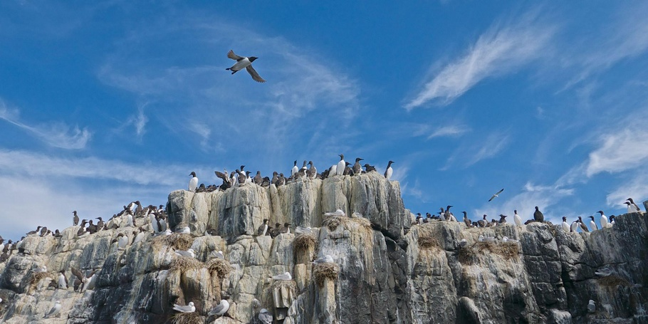 The Farne Islands Bird Colonies