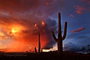 Saguaro at sunset in Tucson, Arizona.  Desert photography workshop.