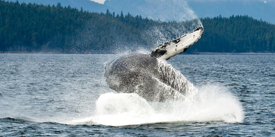 Whales and other sealife