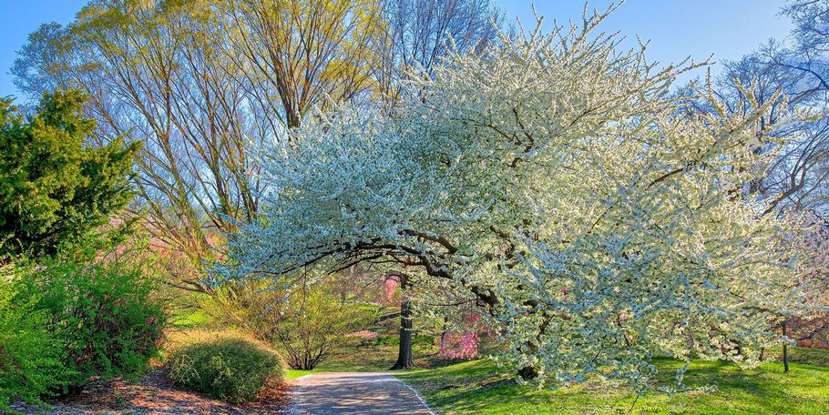 Highland Park Springtime